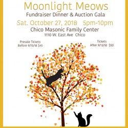 Save the Date: October 26, 2019 is Moonlight Meows!