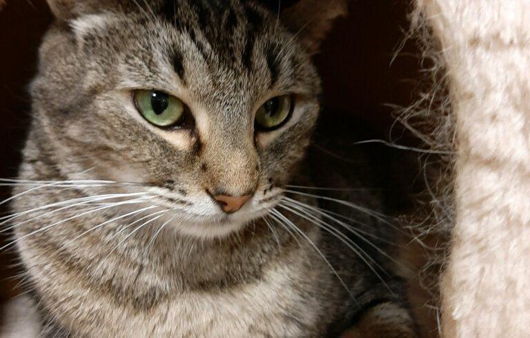 Adoption Story: Minxie!